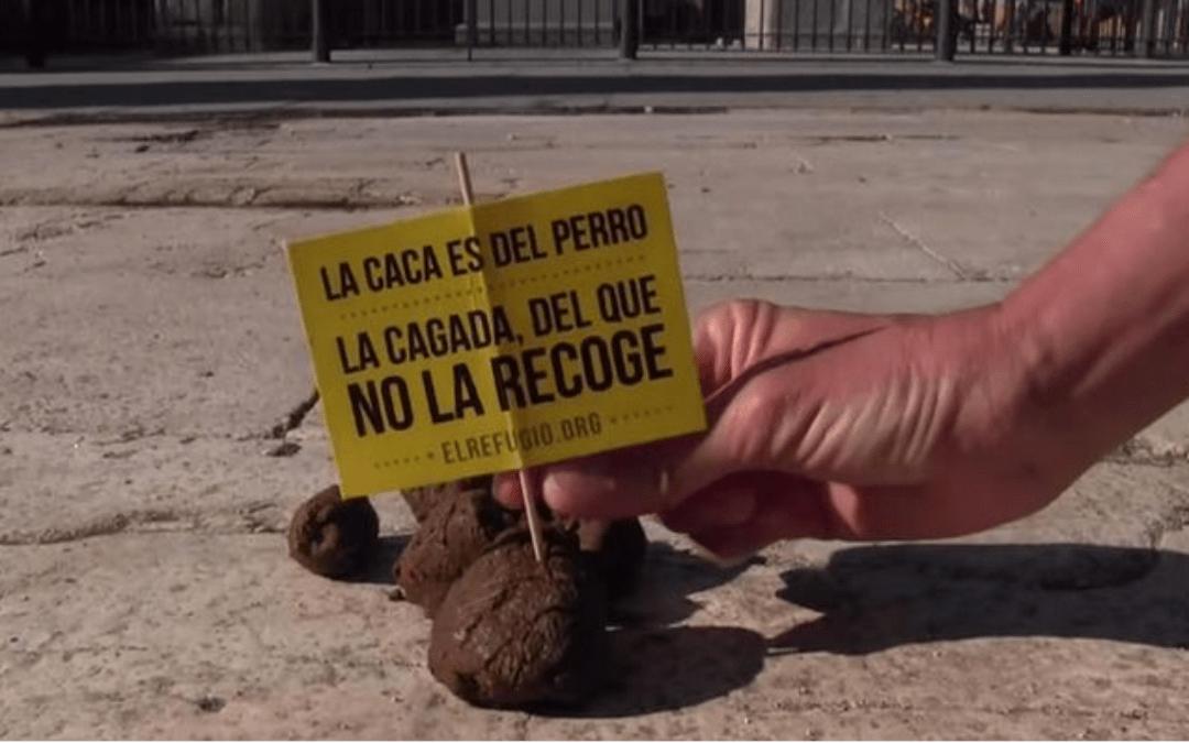 Bando sobre la recogida de excrementos de perros de la vía pública